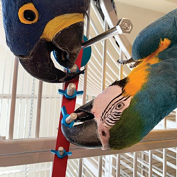 The Busy Playstrip Puzzle Parrot Toy