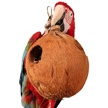 Java Coco Full Moon - Large Natural Chew Toy for Parrots