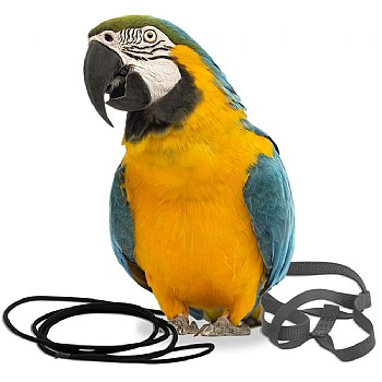 Aviator The Aviator Parrot Harness - Large