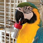 The Goodie Gadget Foraging Puzzle Parrot Toy