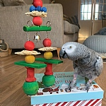 Jingle Bells Stacker Christmas Parrot Toy