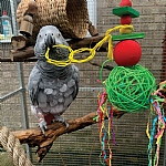 Festive Hanging Mega Munch Ball Christmas Parrot Toy