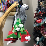 Chunky Wooden Christmas Tree Parrot Toy