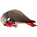 Flip Flops - Parrot Foot Toy - Pack of 25
