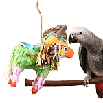 Don the Donkey Ultimate Pinata Parrot Toy - Fill-Your-Own