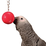 Birdy Babble Ball - Interactive Parrot Toy
