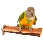 Manzanita Flat Parrot Perch - Small