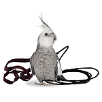 The Aviator Parrot Harness - Petite
